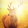 MachineWorks Northwest - 3D Hunting Slots  artwork